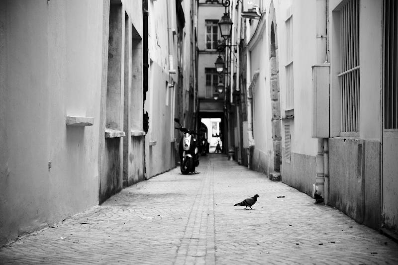 Pigeon.