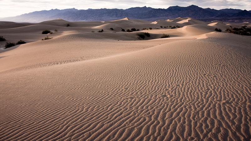 Mesquite Dunes #1.