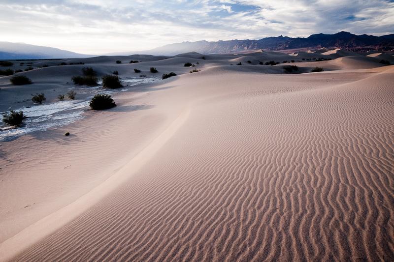Mesquite Dunes #3.