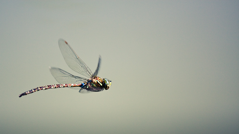 Just a dragonfly.