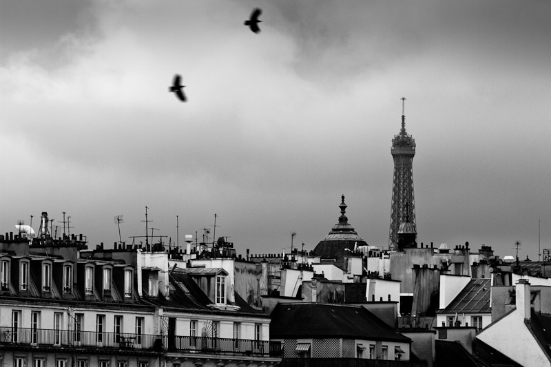 Paris roofs.