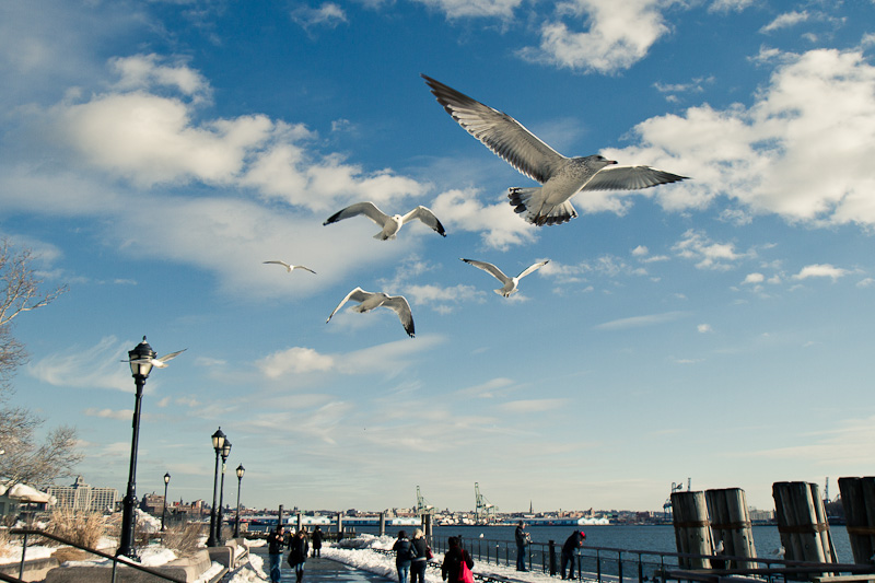 Seagulls in Battery Park.