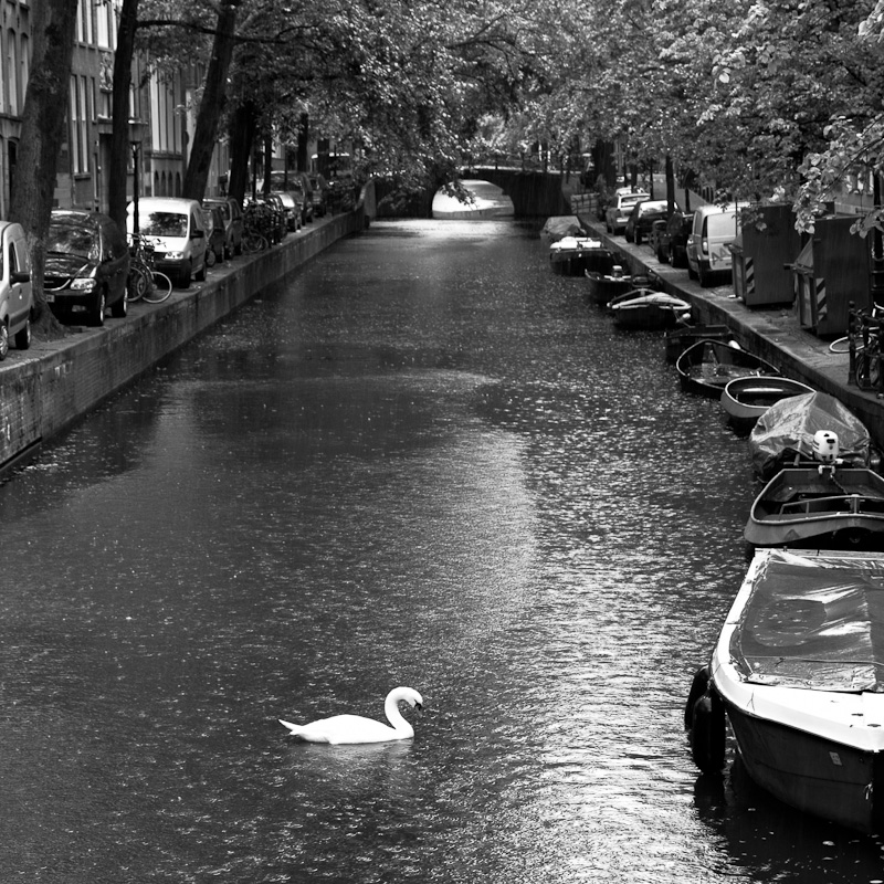 The Swan and the Canal.