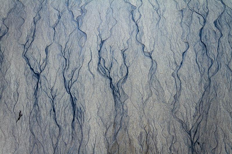 Sea trees.