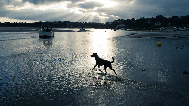 Dog on the Water.