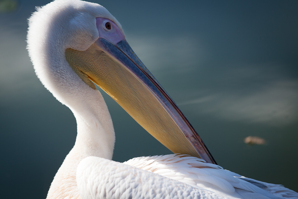 Cleaning Pelican.