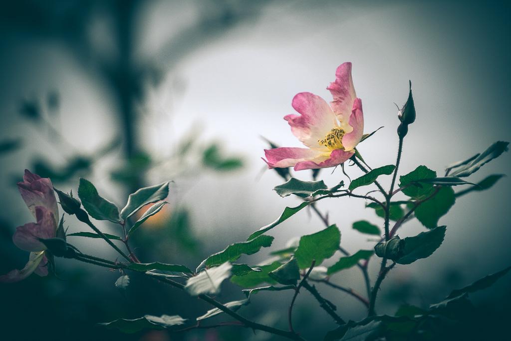 Winter flower.