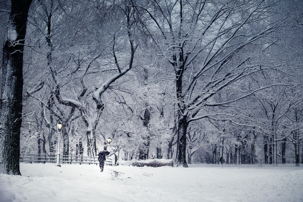 Snowy silhouette in Central Park.