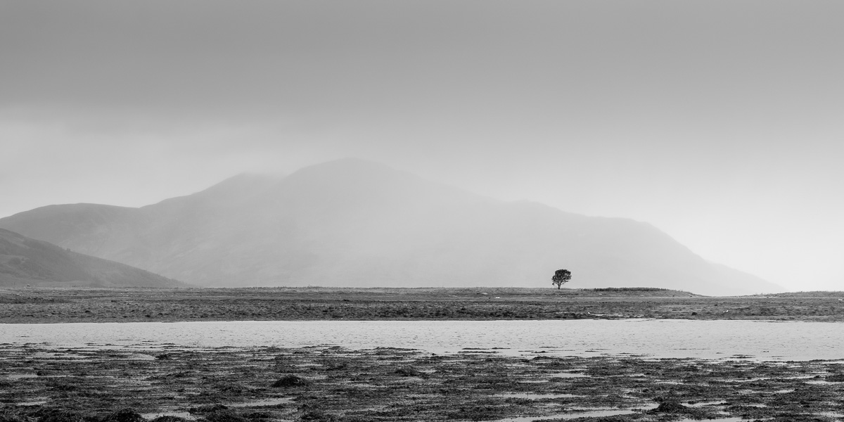Lone tree by the sea.