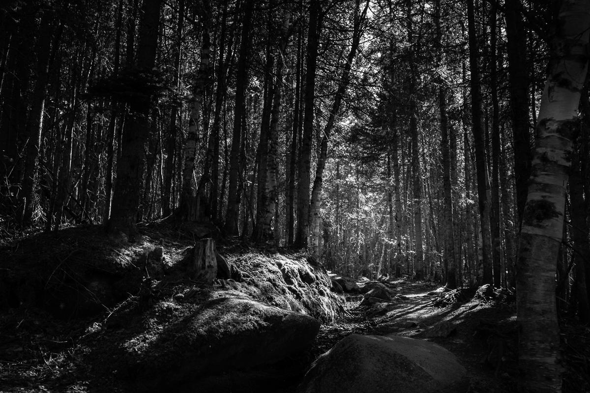 In the forest near Rivière-Éternité.