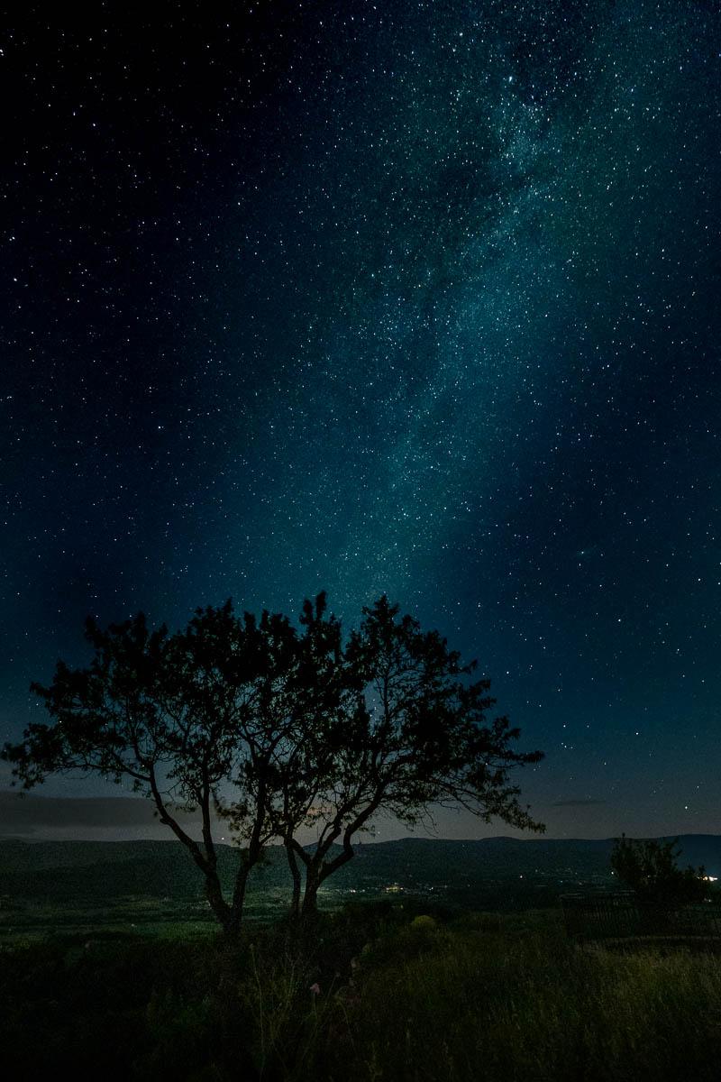 A tree under the stars.